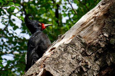 Les oiseaux de Patagonie selon Alexis