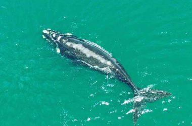 Les baleines de Valdès